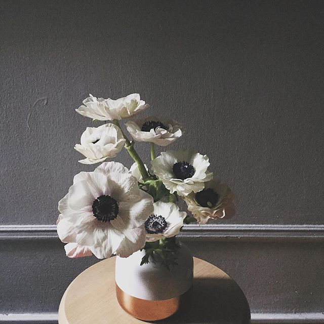 Anemones waking up to the morning light. #hellodarlington #darlingtonflowers