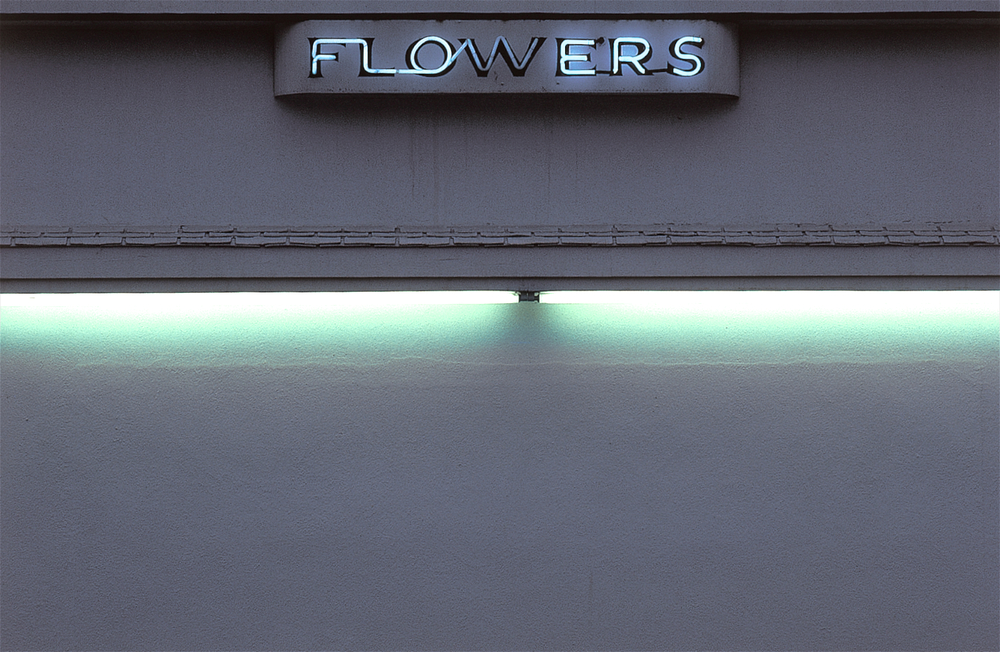 082.NeonFlowers.jpg