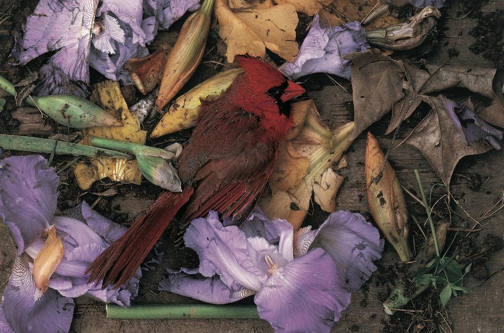 251.Cardinal copy.jpg