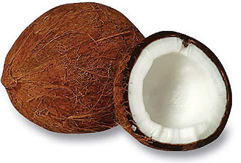 coconuts11