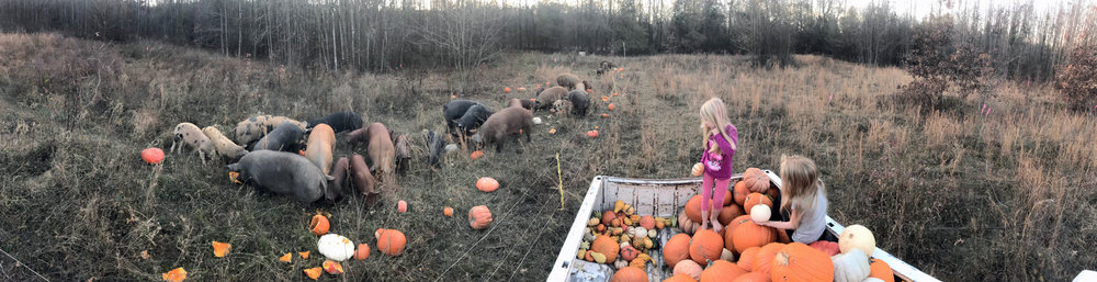 feeding pumpkins 2017.jpg