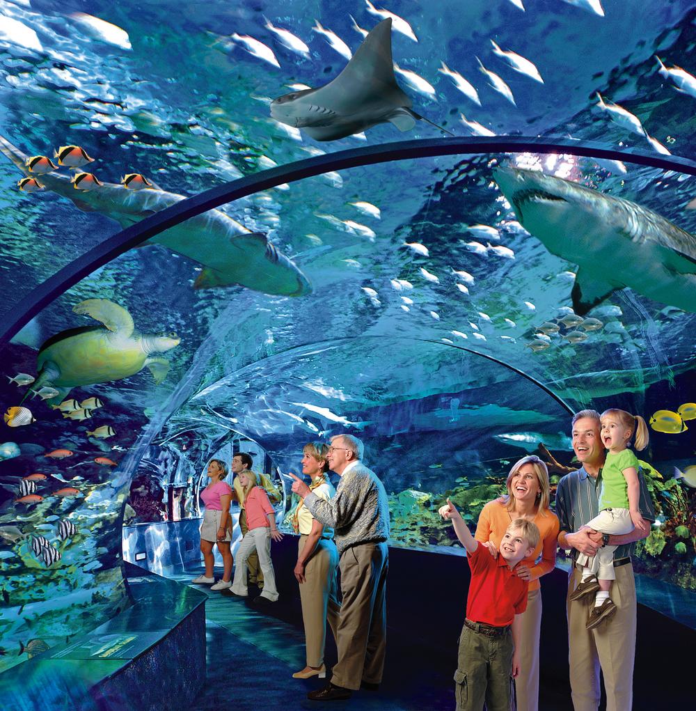 Shark-Lagoon.jpg