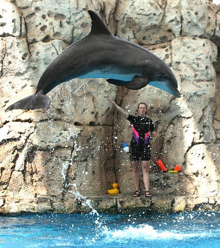 Texas State Aquarium dolphin.jpg
