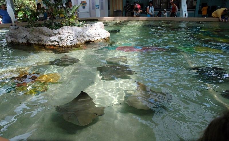 seaworld-stingray-lagoon.jpg