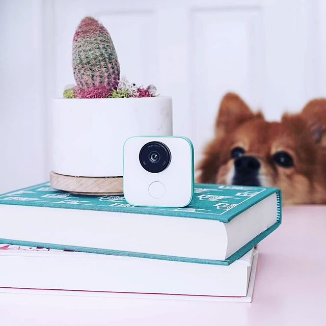 Hey, we know it's been a while.... 💙💙💙💙 but here's an adorable pup🐕🐶 📷⠀⠀ compliments of @ardentreverie. #googleclips #giftfromgoogle