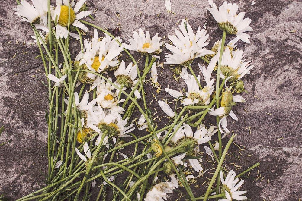 dead-death-decay-2009.jpg