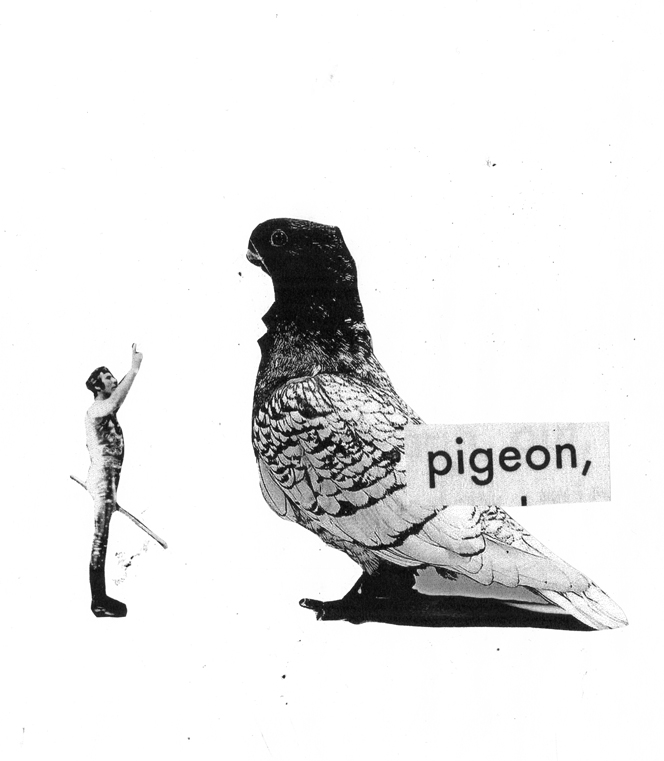 Abcbook_CharlieCamilleThomas_pigeon