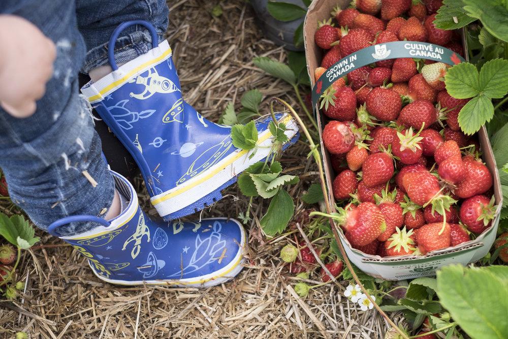 Berry Picking-2.jpg