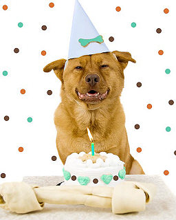 Birthday-Party-Dog.jpg