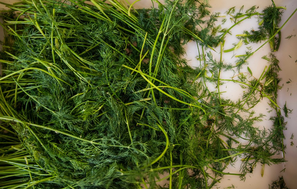 Real Dill websize-22.jpg
