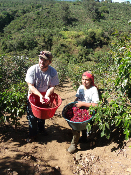 Randy Evans picking cherries at Don Sabino's Finca El Fuerte