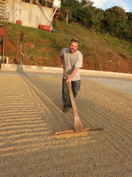Randy learning the proper method of raking the drying patio at Aguilera Brothers mill