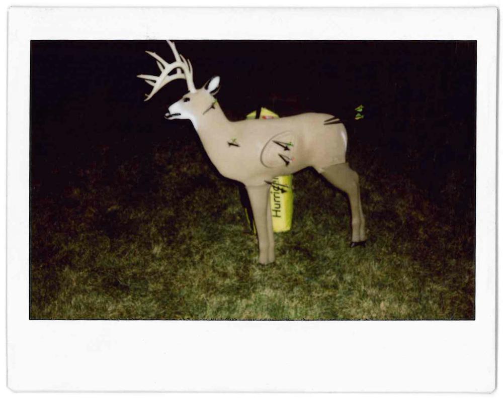 Dead Deer.jpg