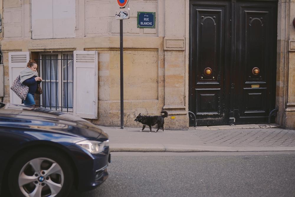 cat in a street_0003.jpg