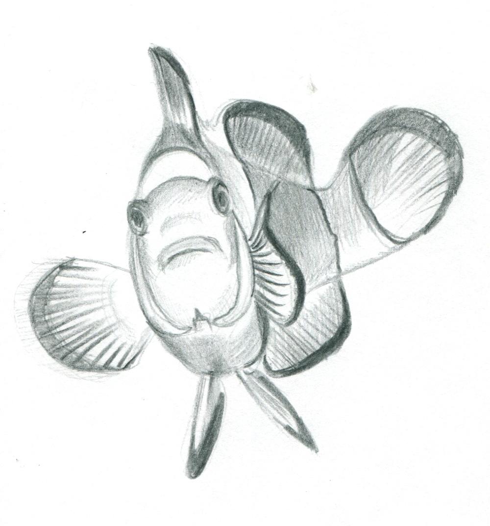 clownfish 1_2.jpg