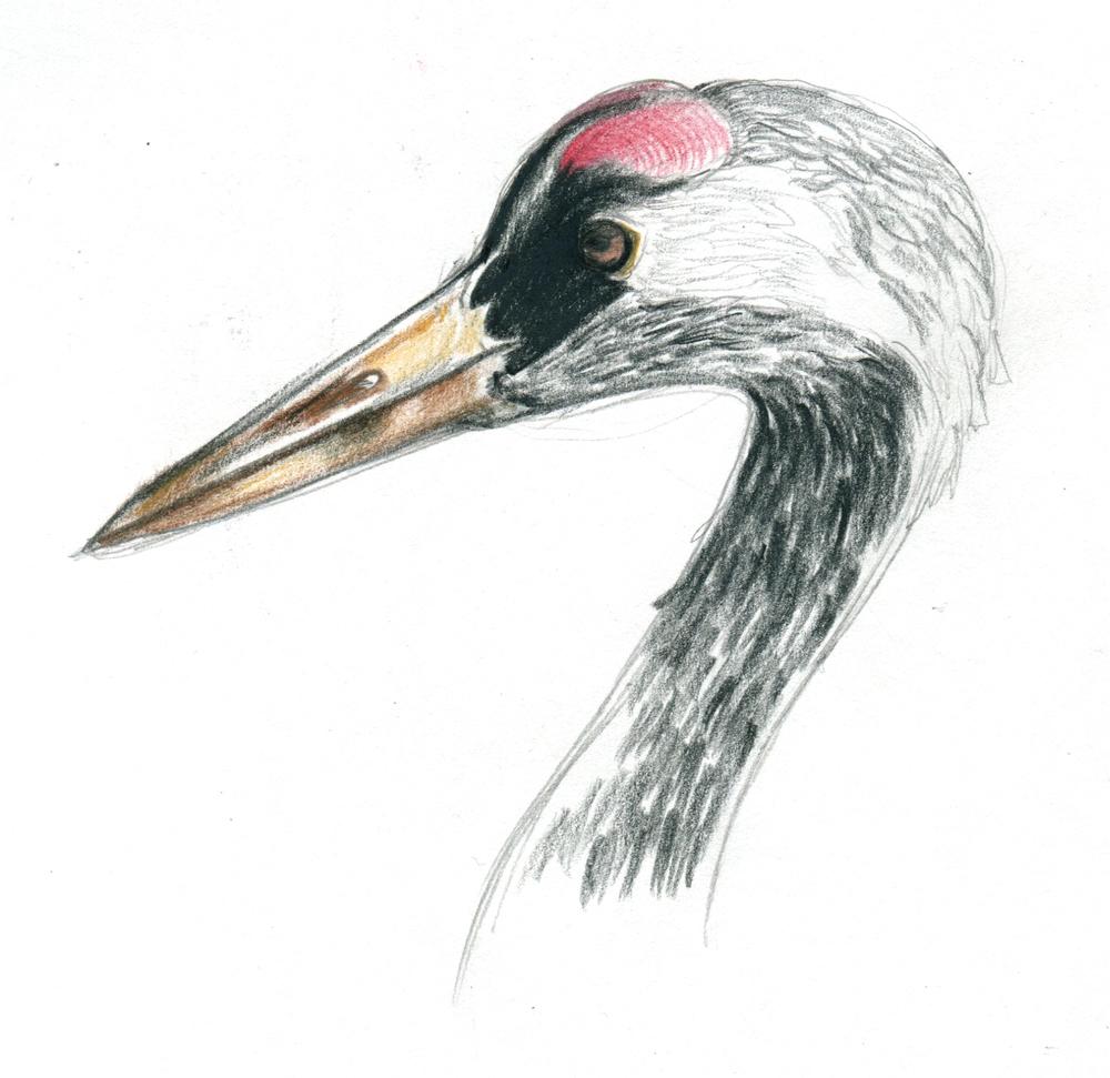 crane 5.jpeg