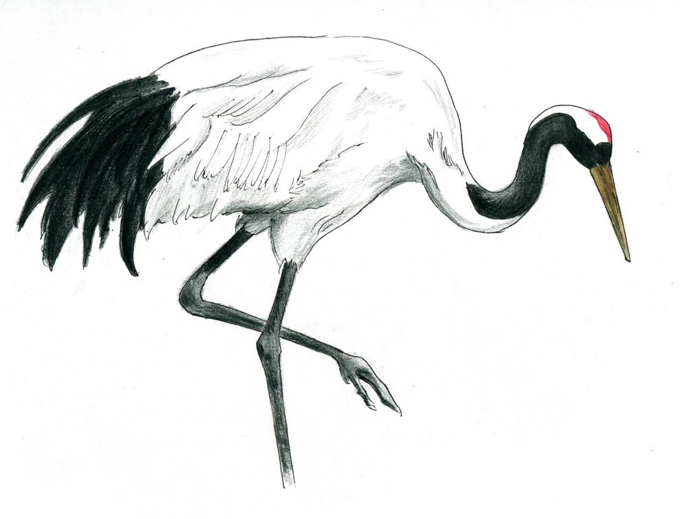 crane 4.jpeg