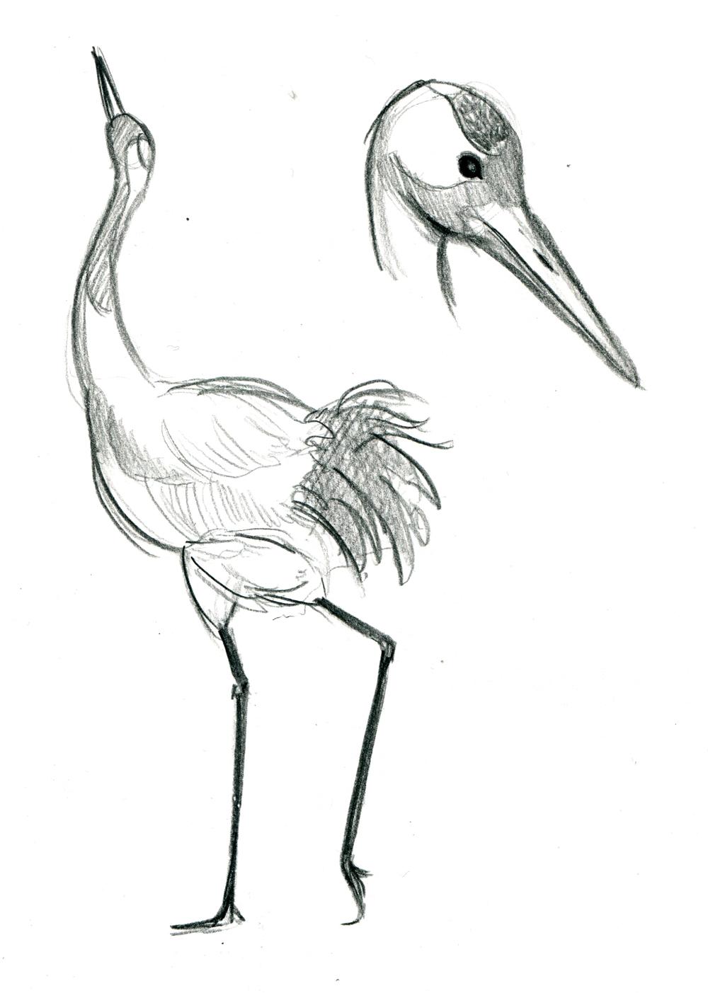 crane 6.jpeg