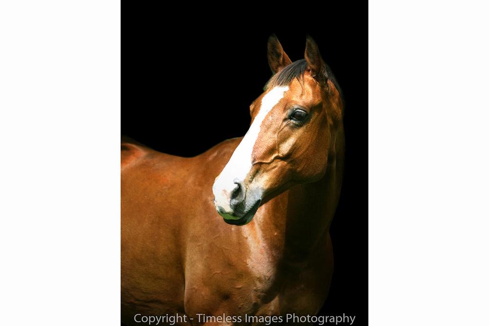 Horse Portrait - Sparky