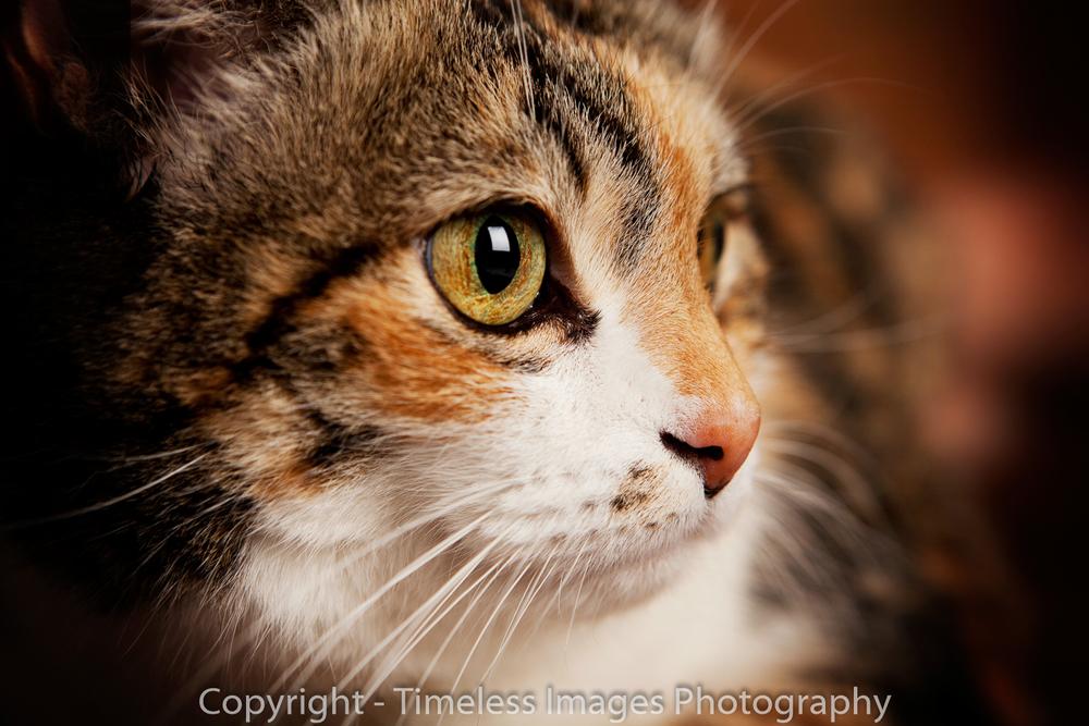 Pet Photography Portraits 01 (1)-2.jpg