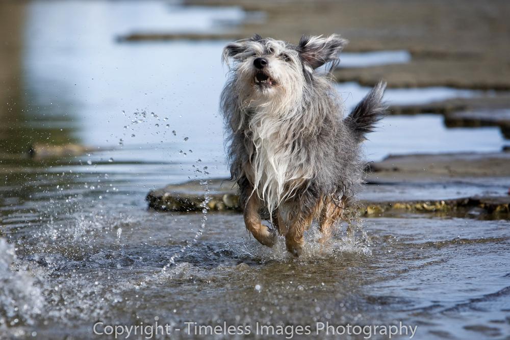 Pet Photography Portraits 01 (2).jpg
