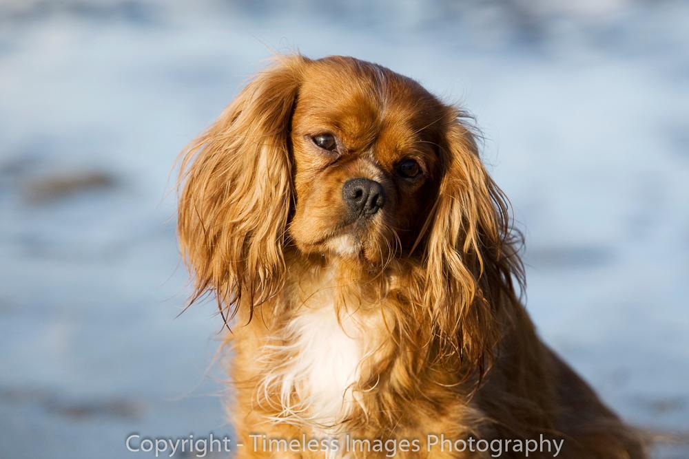 Pet Photography Portraits 01 (7).jpg