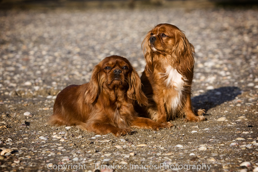 Pet Photography Portraits 01 (6).jpg