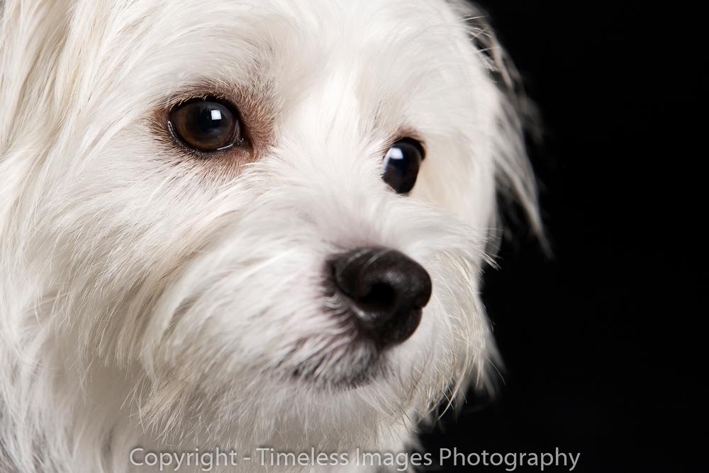 Pet Photography Portraits 01 (8).jpg