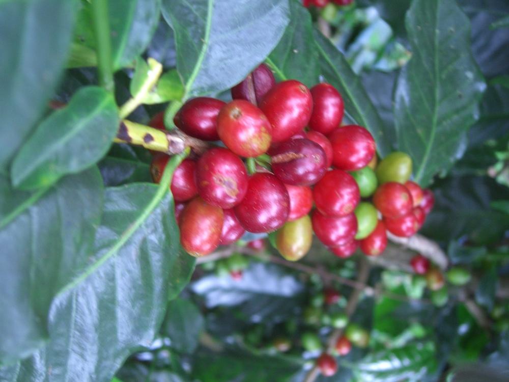 CQI Chiapas Oct 2011 047.JPG