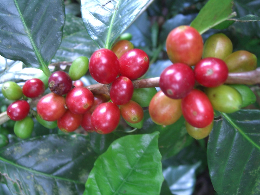 CQI Chiapas Oct 2011 048.JPG