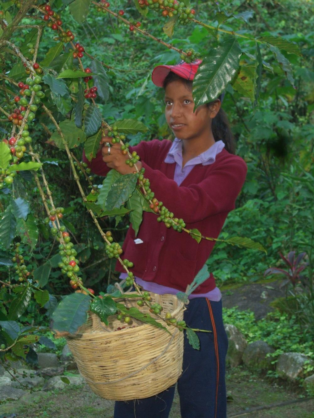 CQI Chiapas Oct 2011 074.JPG