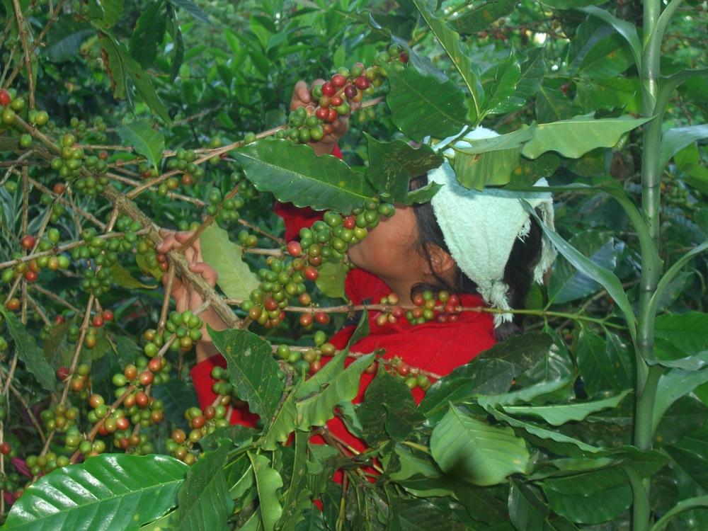 CQI Chiapas Oct 2011 075.JPG