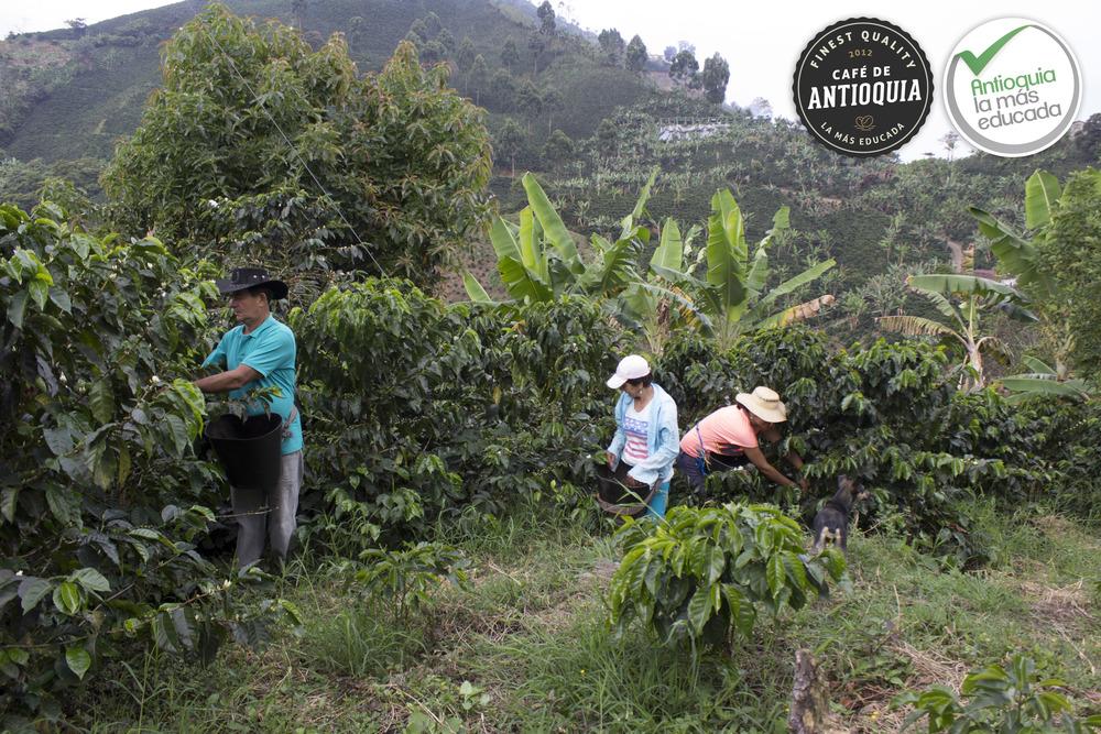 Antioquia Microlot Finca El Manatial1.JPG