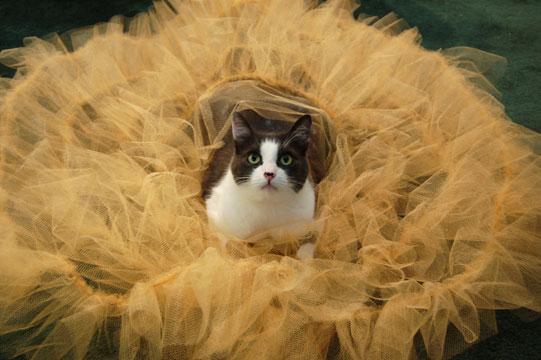 Dude, it's a cat in a petticoat. How could I resist?