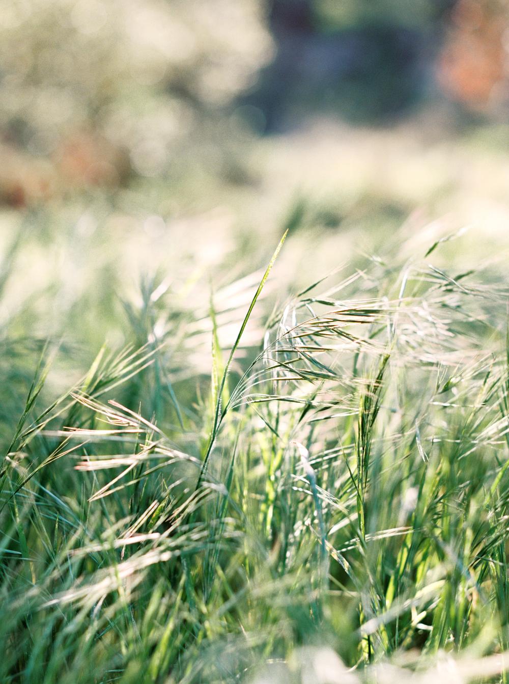 DennisRoyCoronelPhotography_PacificBride-1.jpg