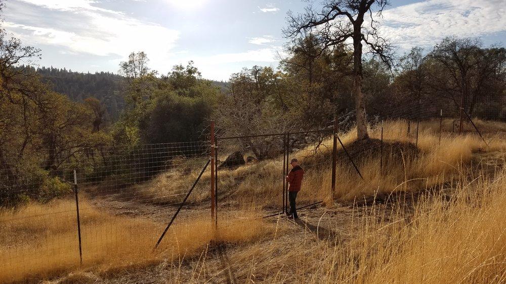 deer fence.jpg