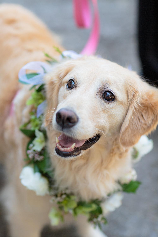 Whetstone Winery Wedding  dog in wedding