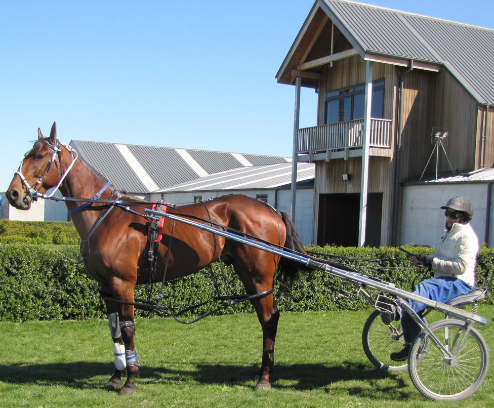 SUSHI SUSHI PREPARING FOR A WORKOUT AT ROLLESTON BEFORE THE NZ CUP IN WHICH HE PRODUCED AN OUTSTANDING PERFORMANCE