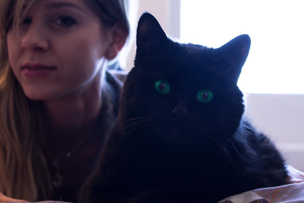 Meet pussy cat-Boinger