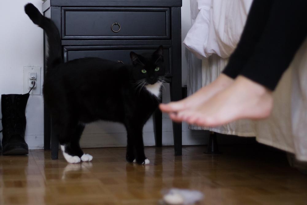 Meet pussy cat- Dino