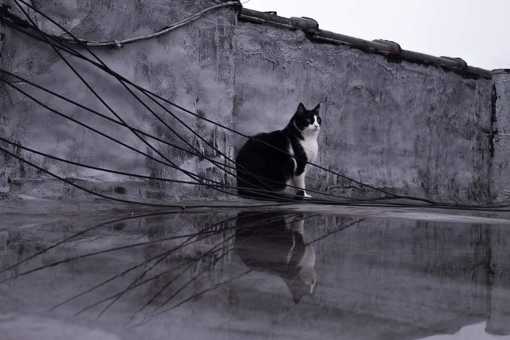 Meet pussy cat- Yoshi