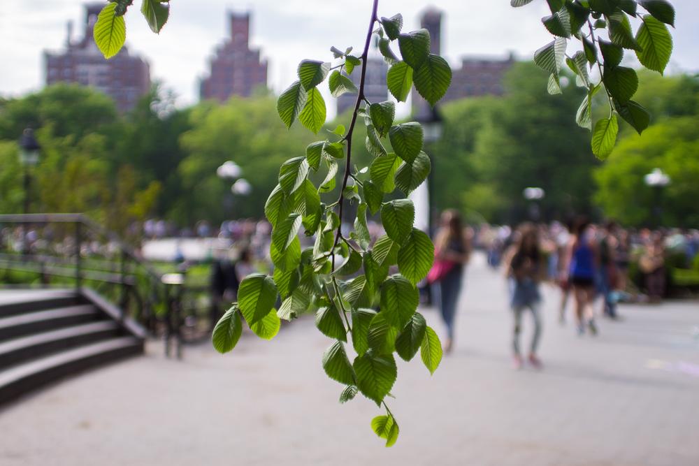 Washington Square Park NYC, May 2015