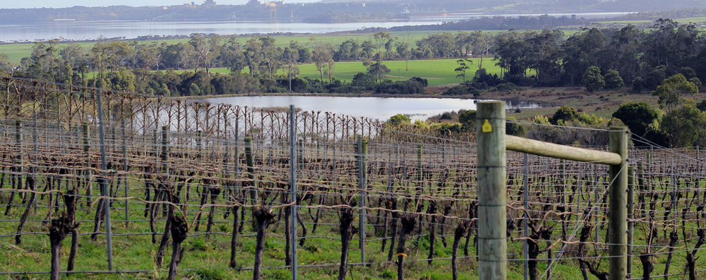 Tasmanian Vineyard in Winter Pruning Beautiful Landscape
