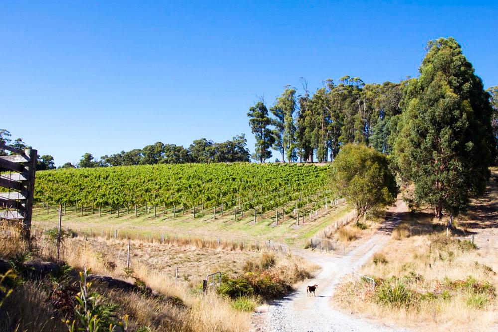 Vineyard Glendale Tasmania