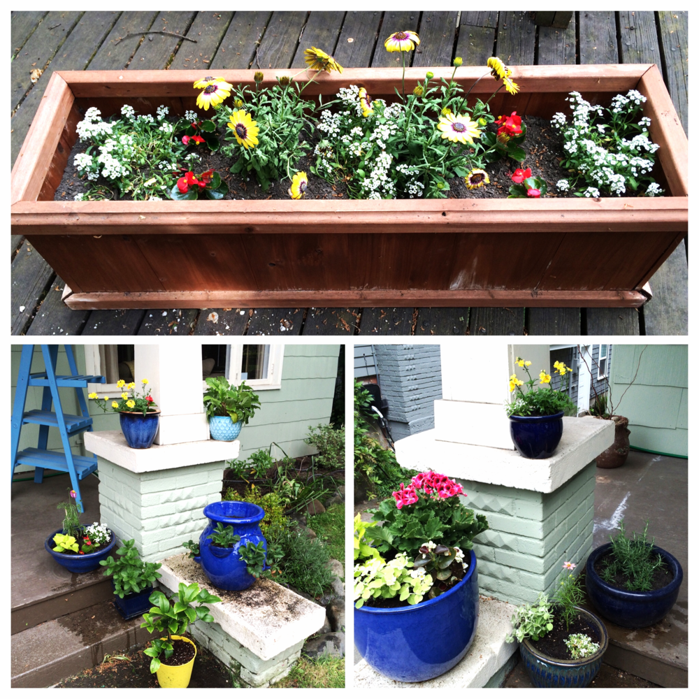 This year's seasonal flower pots! With some mint and rosemary thrown in for good measure.
