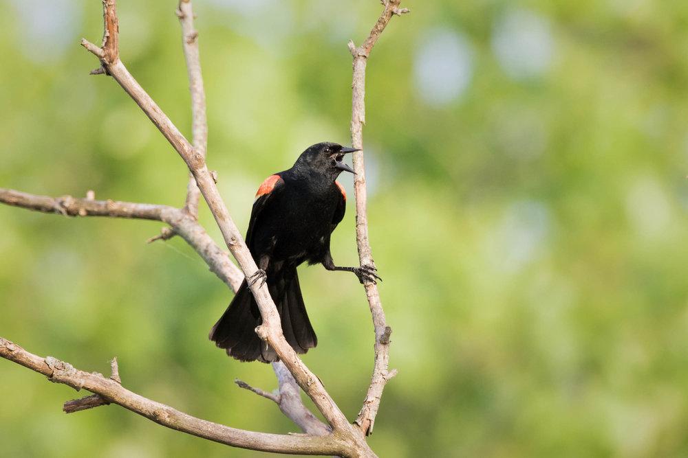 birds-9.jpg