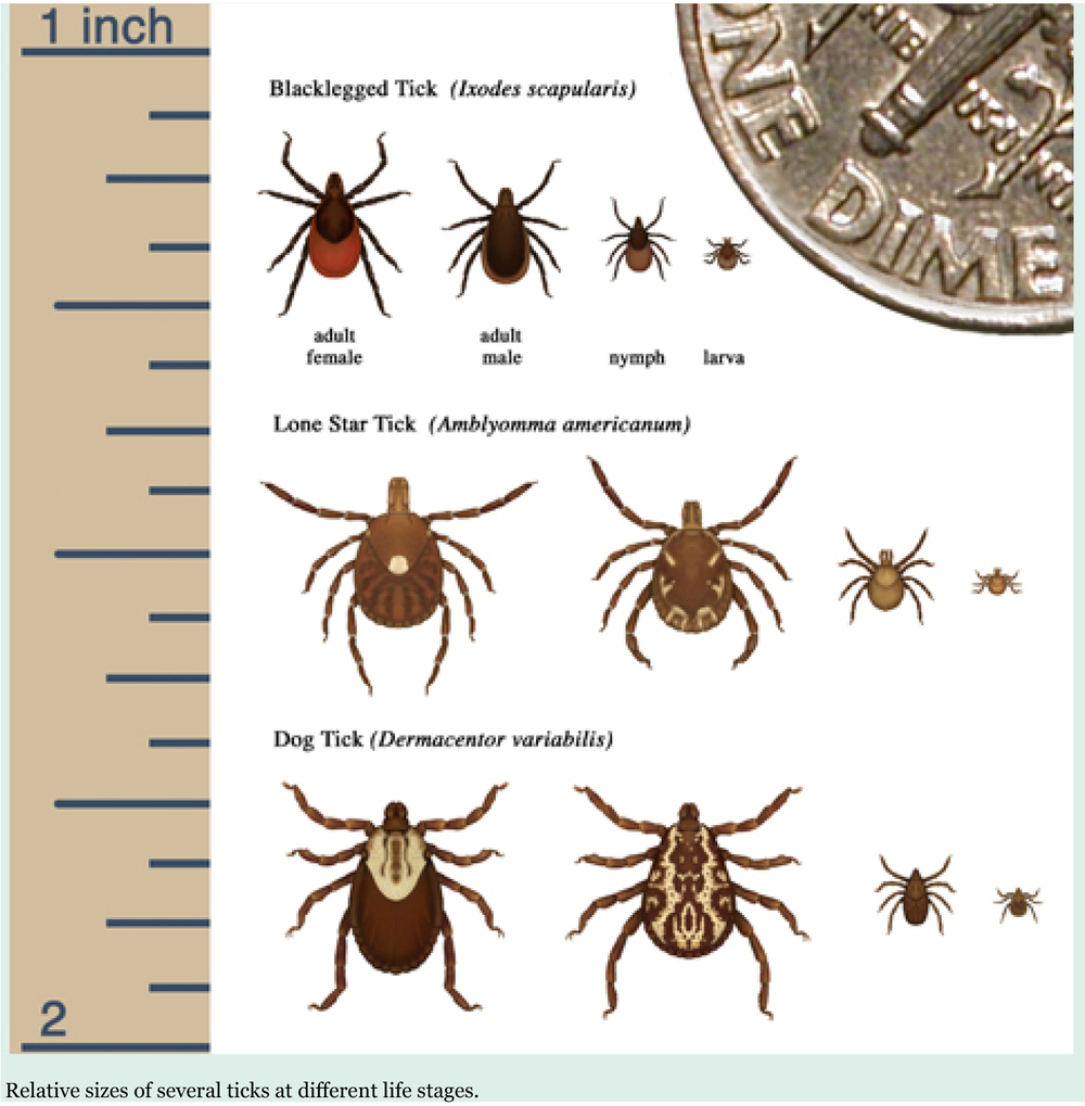 Tick graphic.jpg