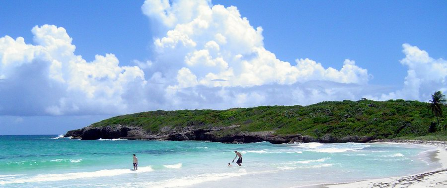 vieques-puerto-rico-beach.png