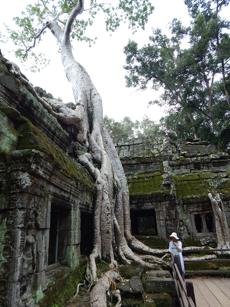 The jungle has spent roughly 7 centuries trying to reclaim these buildings, with striking effect. This is the temple where Tomb Raider was filmed.
