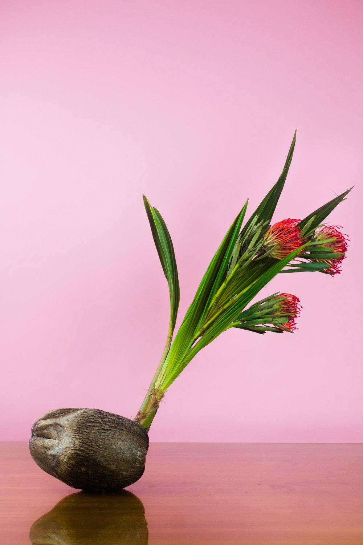 caro-flowers-edit3-.jpg